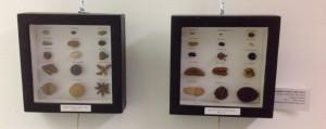 Hegelian Seed Collection- conceptual art