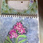 at allen gardens 2 drawing is important by lauren renzetti